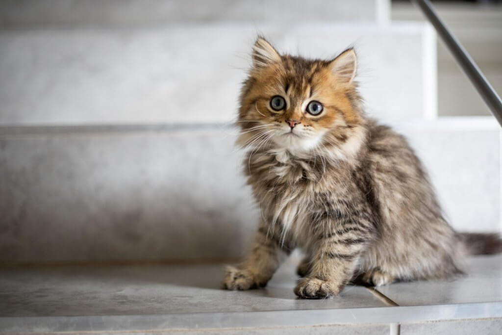 猫エイズ(FIV)症状・検査・治療・寿命