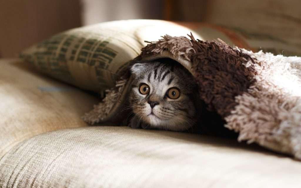 猫のストレス解消グッズ、おもちゃって何があるの?猫好き獣医師が徹底解説!