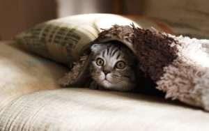 猫エイズ(FIV)の正しい知識を身につけよう~口内炎・検査・治療について~