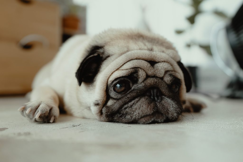 老犬の保険について理解することができる