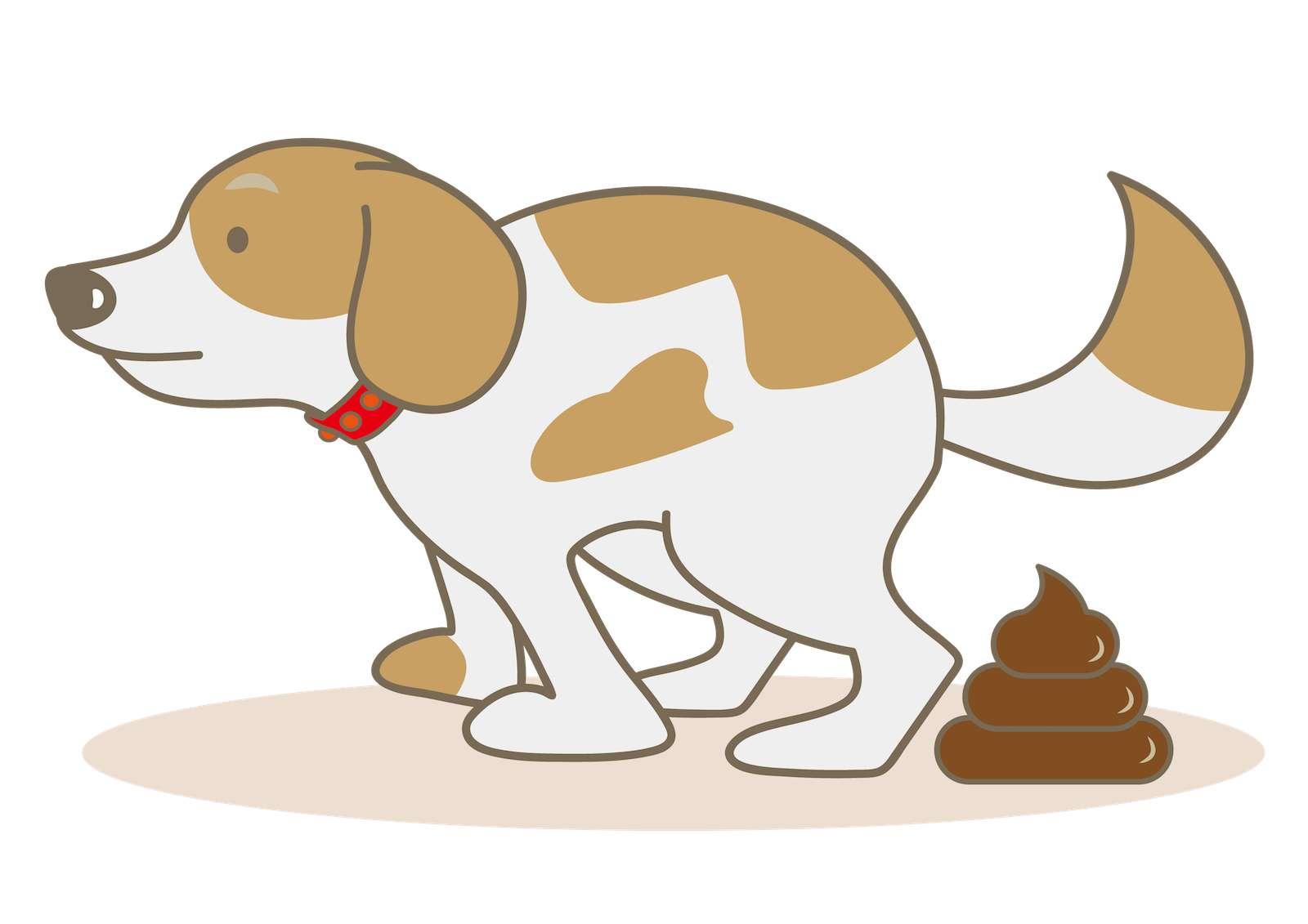 犬の下痢・腸炎】タンパク漏出性腸症と診断された!寿命・適切なフード・手作り食について 獣医師が解説