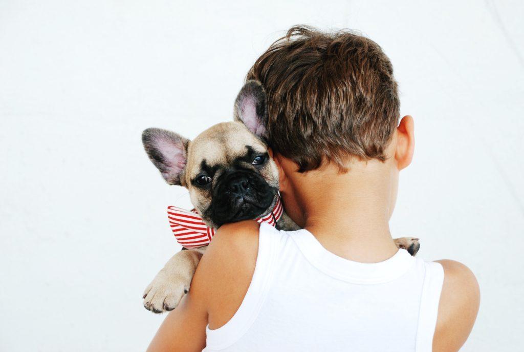 老犬で起こりやすい病気 、それに対するケアを知ることができる