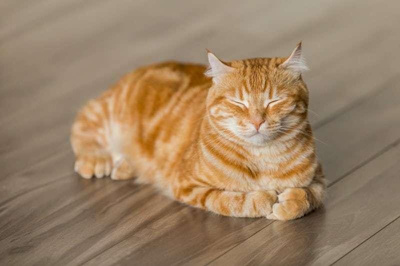 ネコの歯肉炎・口内炎についてオススメ記事まとめ