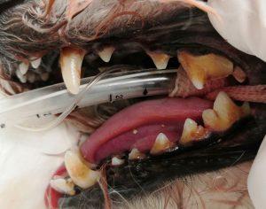 スケーリング処置前の歯