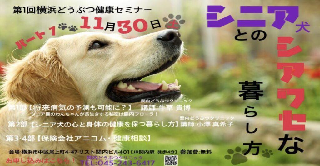 【獣医師による無料セミナー開催のお知らせ】老犬の病気・ケア・保険について詳しく解説