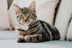 【猫の口内炎】食事・症状・治療・サプリについて獣医師が解説